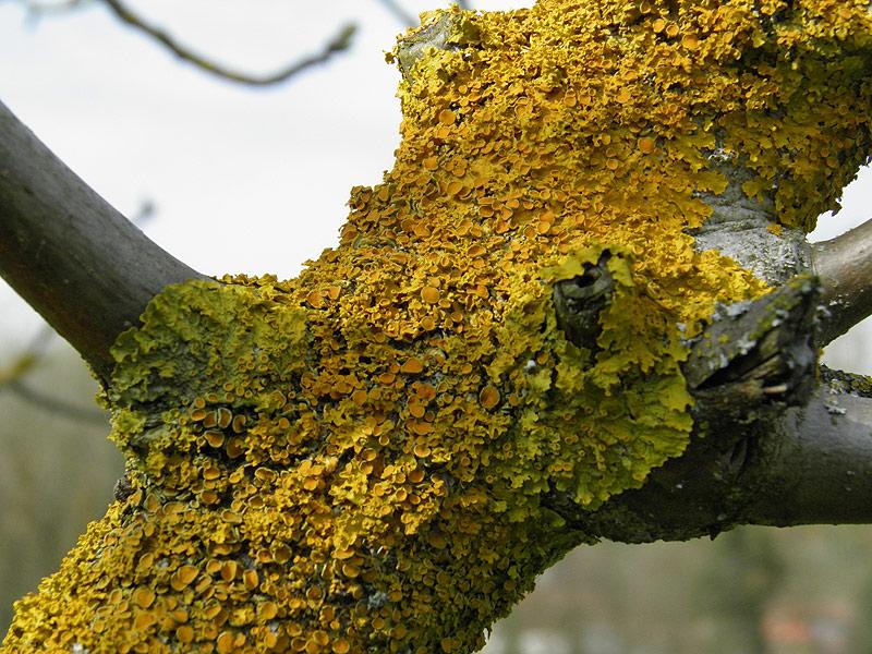 Alberi rampicanti e cespugli for Foto di alberi da colorare