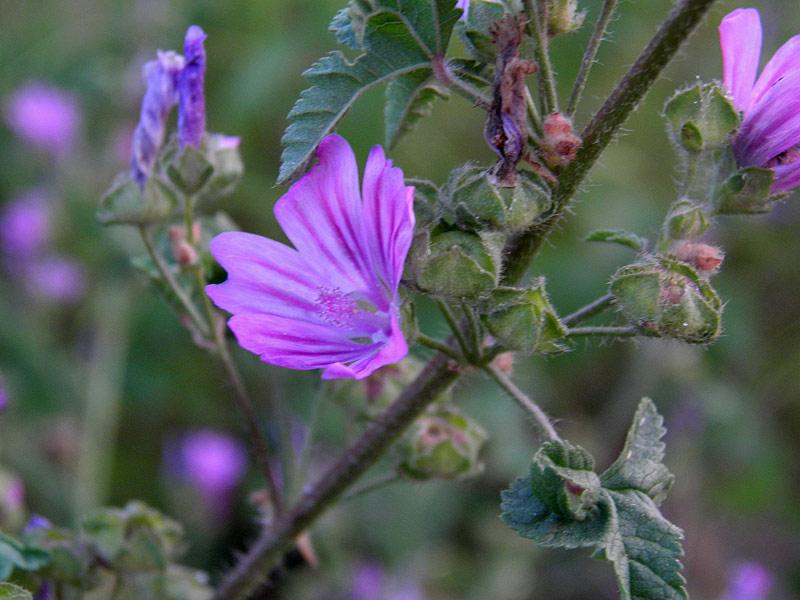 Fiori nomi e foto fiori viola nomi significato fiori for Fiori immagini e nomi